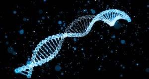 Collie DNA