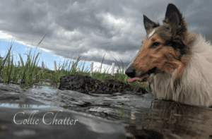 Yoshi in the water