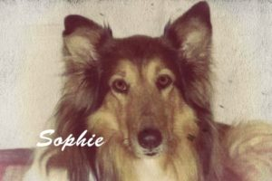 Legacy of A Rescued Collie