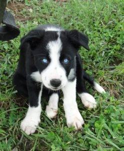 Jolene Puppy