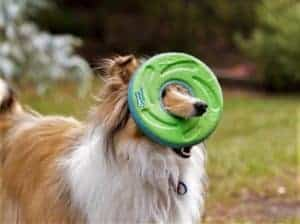 Matilda thinks any frisbee with a hole is the best frisbee ever!