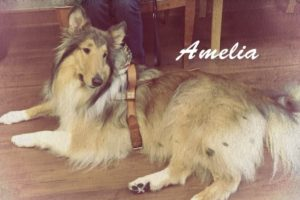 Sassy Lassie, The Rough Collie Guide Dog