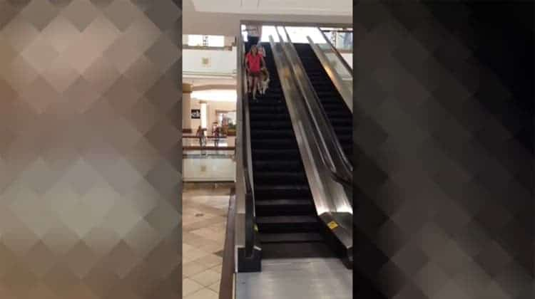 escalator ride thumb