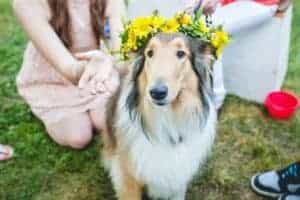 Amelia crowned with a wreath of yellow flowers.