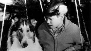 Timmy looking at Lassie, black/white photo.