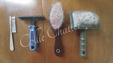 Rough Collie Grooming Tools