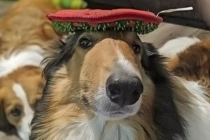 Our Top 20 Recommended Toys for Collies