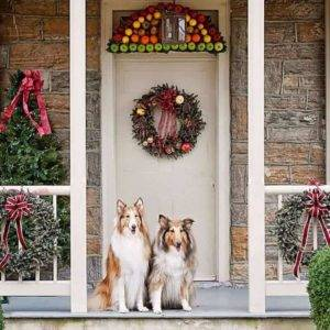 Two Sable and white Rough Collies sitting side by side on a porch decorated for the holidaysl