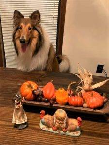 A happy sable and white Rough Collie sits at a table decorated with Thanksgiving decorations.