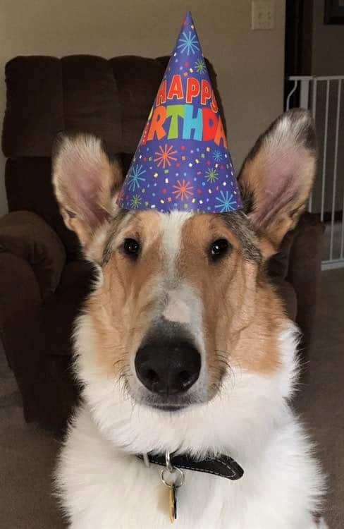 Tag wearing a birthday party hat!
