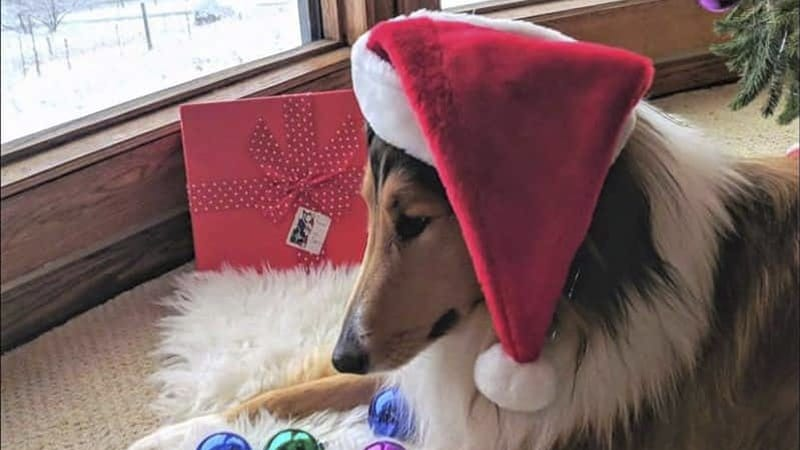 Holiday Gift Guide for Collie Lovers