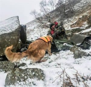 A woman hiding among rock pile found by Golden Retriever search dog