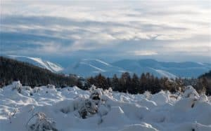 Cairngorm mountains covered in snow, trees felled by avalanche