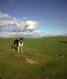 Finn stands in a green field under a sunny blue sky with puffy white clouds