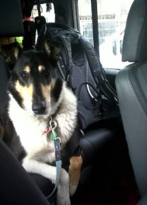 Finn waits on the back seat of a car