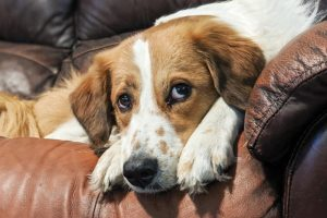 Tips for the Bored, Attention-Seeking Dog