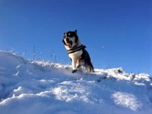 finn hurtling down a steep, snowy slope straight at the camerman
