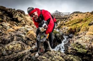 A handler pets his search dog, a black and white smooth coated border collie licking its lips