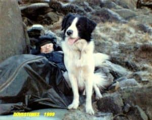 Roy sits on a rocky outcrop before a volunteer dogsbody he discovered