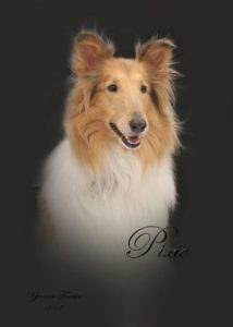 Professional Pixie Portrait