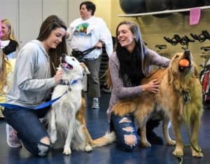 Golden Retriever Cory gets petted by college students while holding a ball in his mouth