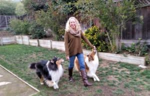 A laughing blondhaired woman walks between 2 Rough Collies, one tricolor and one sable and white