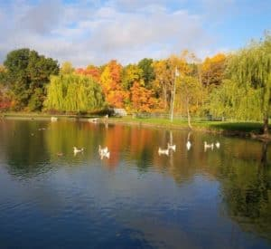a clear blue pond surrounded by colorful trees with waterfowl floating on its placid surface