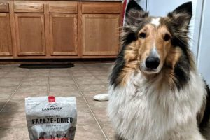 Great Treats for Collies (Easy on the GI Tract)
