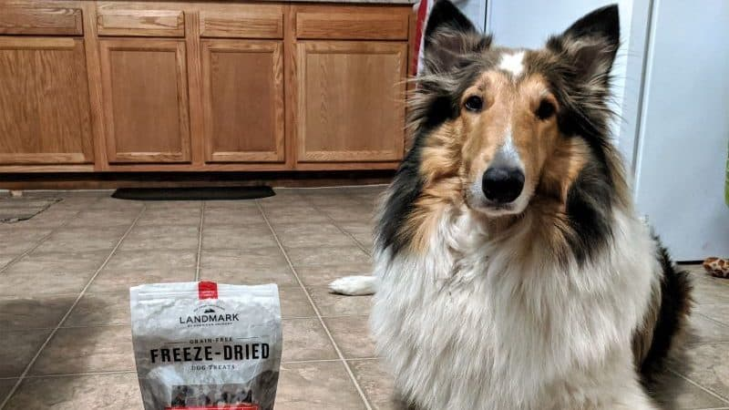 You are currently viewing Great Treats for Collies (Easy on the GI Tract)