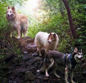 Vasya, Seneca, and Lakota stand in the sun in a green wood