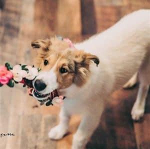 Baby Vasya chews a wedding flower arrangement