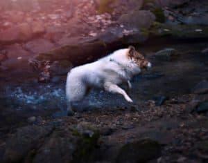 Vasya bounces through a shallow creek