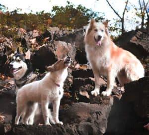 Seneca, Lakota, and Vasya stand on a rocky outcrop, with Vasya howling like a little wolf cub