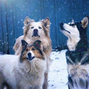 Vasya, Seneca, and Lakota stand outside amid falling snowflakes