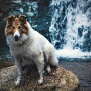 Vasya sits on a rock before a waterfall
