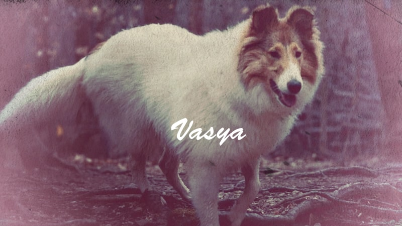 You are currently viewing Vasya, Rough Collie Psychiatric Service Dog in Training