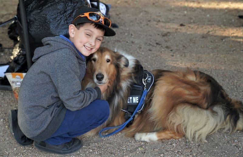 """A sable and white Rough Collie lies on the ground wearing a vest that says """"pet me"""" and being petted by a happy young boy"""