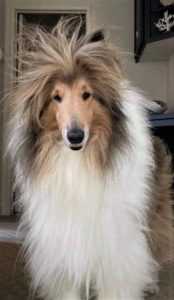 Cody stands at the top of the stairs with his bangs straight up in the air from static electricity
