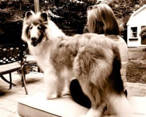 Fluffy puppy Cody stands outside with Donna, while his tongue hangs out the side of his mouth