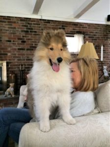 cody as a fluffy puppy stands confidently beside Donna with his front feet on the back of the couch