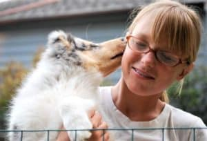 a small blue merle Rough Collie puppu happily licks the cheek of a smiling young girl