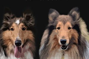 Affordable, Professional Pet Portraits