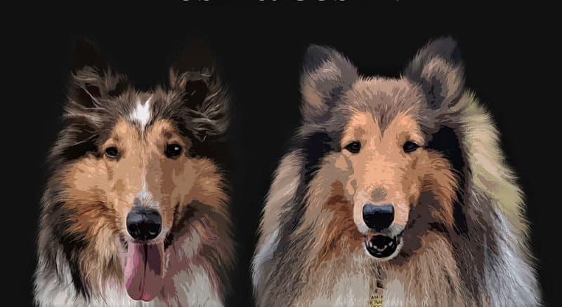 You are currently viewing Affordable, Professional Pet Portraits