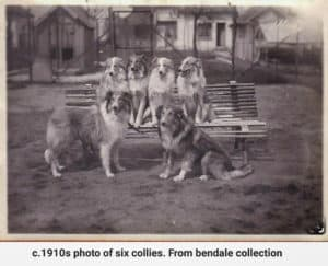 A vintage black and white photo circa 1910s of six Collies posed sitting on and in front of a bench. From Bendale Collection