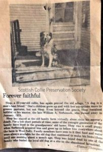 "Newspaper clipping says ""Forever Faithful"" and shows a black and white image of Shep on a front porch"