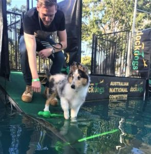 A blue merle Rough Collie puppy stands on a ramp leading down into a pool
