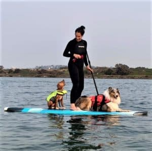A blue merle Rough Collie in an orange life vest lies calmly on an paddle board while a Nova Scotia Duck Tolling Retriever puppy in a yellow life vest sits on the board and appears to be vocally complaining to his human, a woman wearing a black scuba suit who is standing and paddling while she looks down and laughs at her puppy
