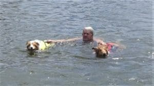 Two Rough Collies in life vests tow a man through the water. He is holding the handles of their life jackets