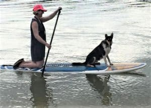 A tricolor Smooth Collie sits on a paddleboard while his human steers from the rear