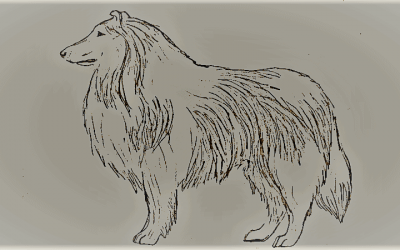 A sketch of a full-coated Rough Collie standing in profile view